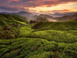 Singapore to Cameron Highlands